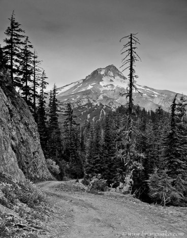 Road in the Mount Hood National Forest, Oregon.