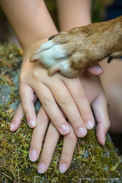 Family and pet portrait of the hands of two sisters and picture of their dogs paw.