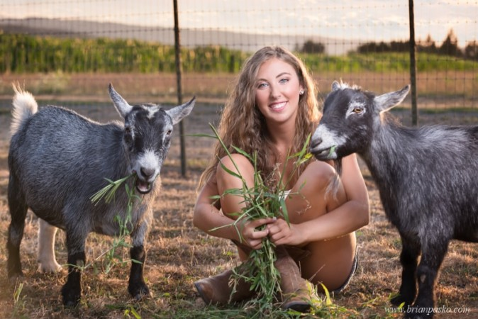 High school senior portrait of a girl and goats on a farm with picture at sunset.